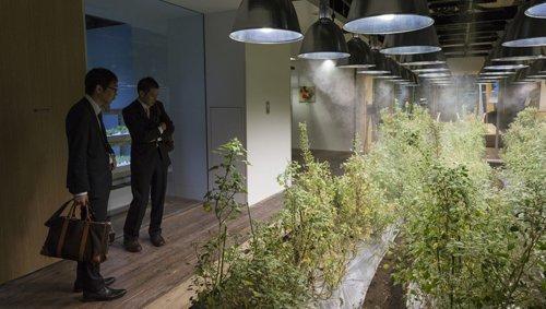 CIUDADES ESPEJO: TOKIO. La cosecha en la oficina