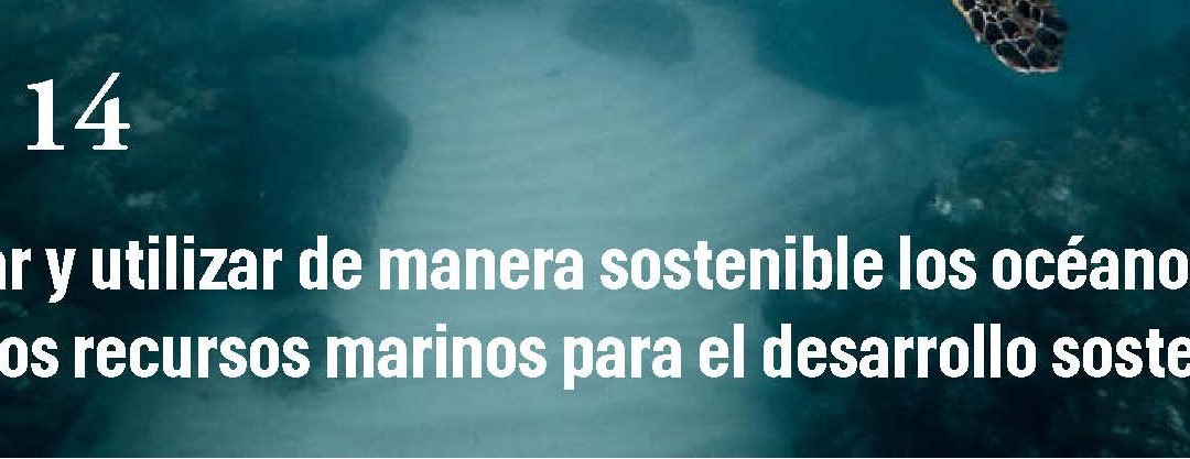 Jornada REDS | EL OCÉANO: CLAVE PARA LA SOSTENIBILIDAD