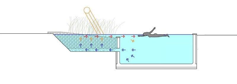 Piscinas naturales y ecol gicas asa for Como hacer una piscina economica